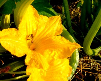 garden-july-1-090