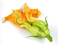 Edible squash blossom